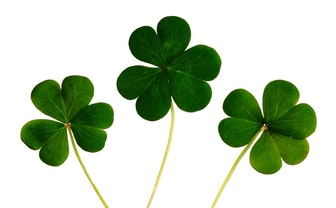 5 Ideas To Have More Fun This St. Patrick's Day