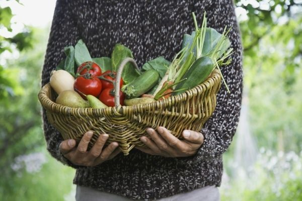grow your own food to eat healthy on a budget