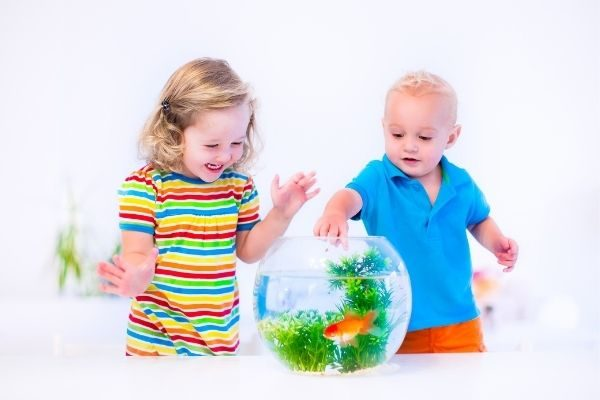 an aquarium for the child who has everything